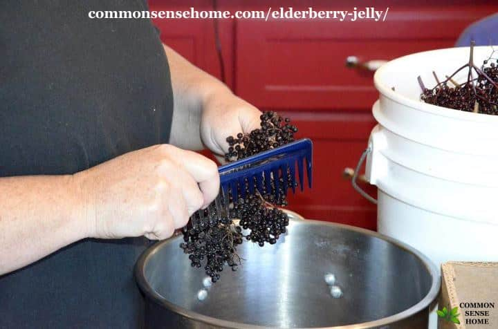 elderberry stripping
