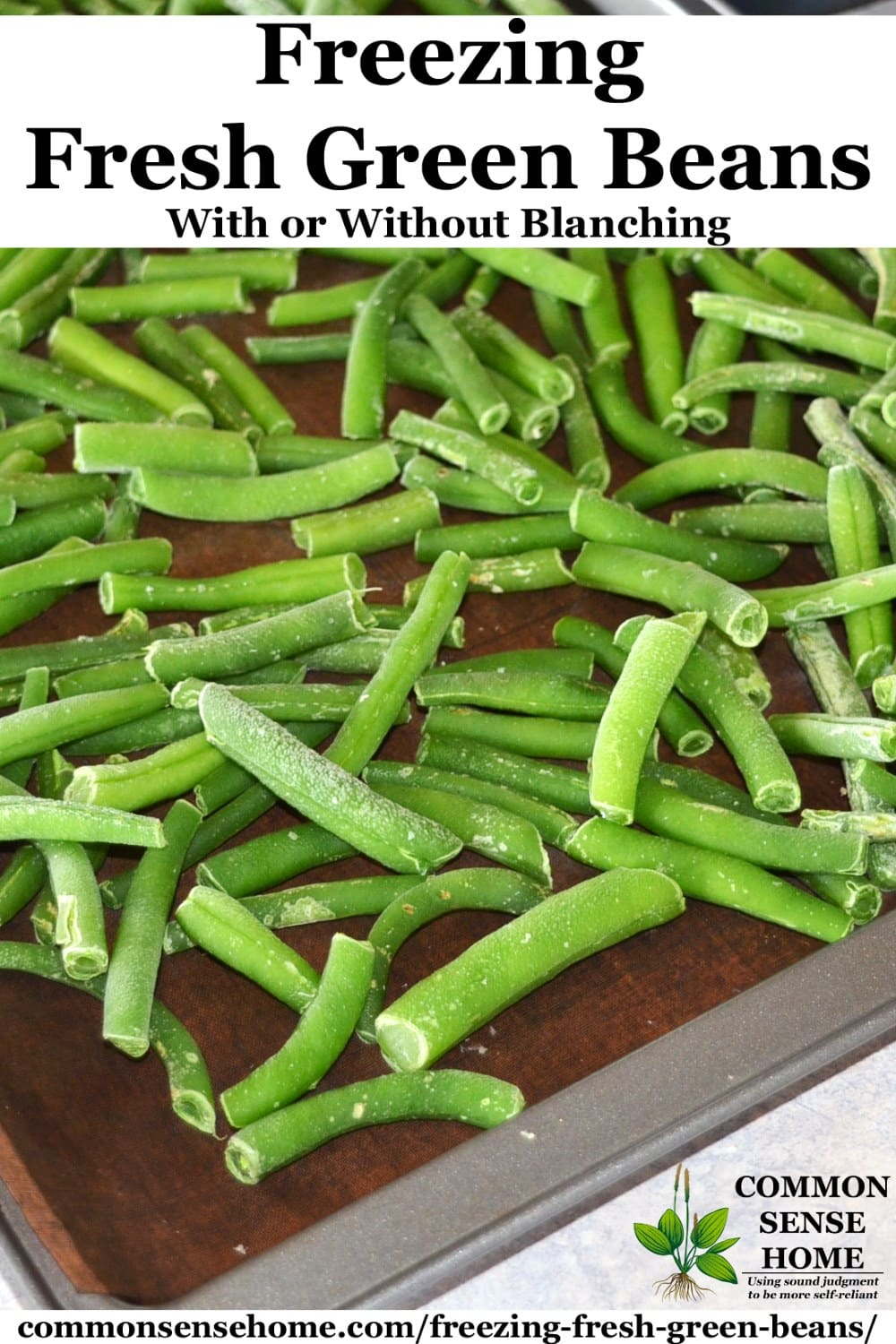 flash freezing green beans on a cookie sheet