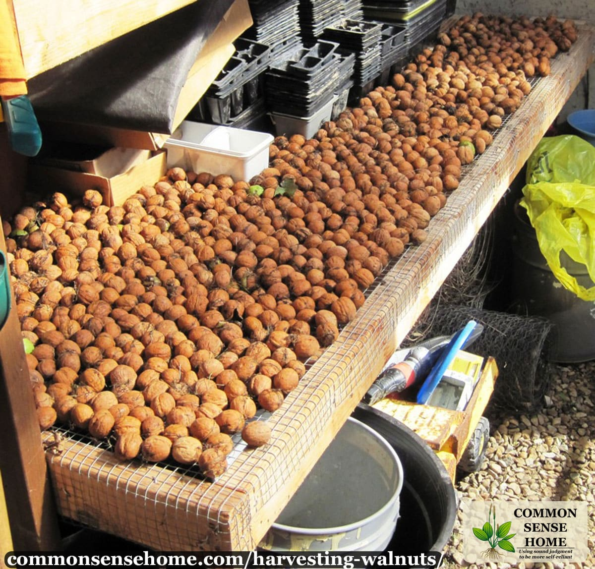 drying walnuts in the shell
