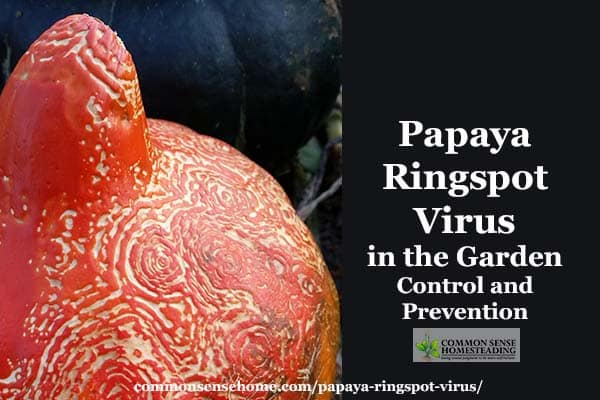 Papaya ringspot virus (PRSV-W) can infect a number of common garden crops. We'll discuss prevention and control, as well as using affected fruit.