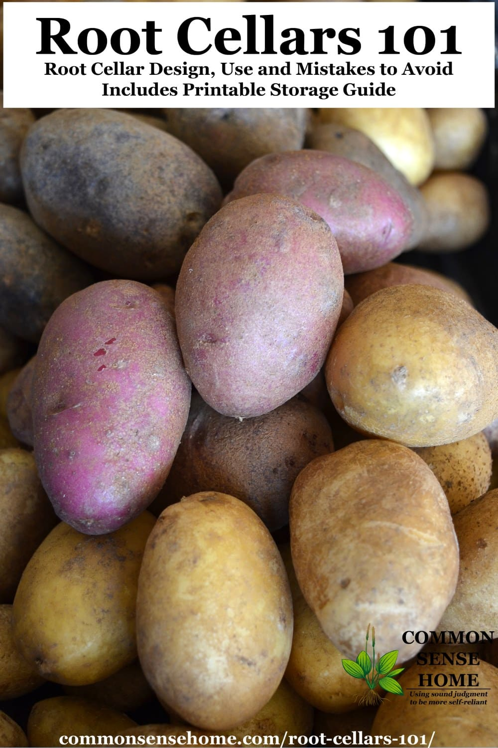 stored potatoes