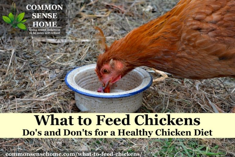 What to Feed Chickens – Do's and Don'ts for a Healthy Chicken Diet