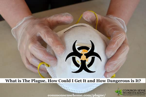 What is The Plague, How Could I Get It and How Dangerous is It?