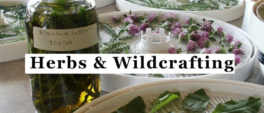 Herbs and Wildcrafting