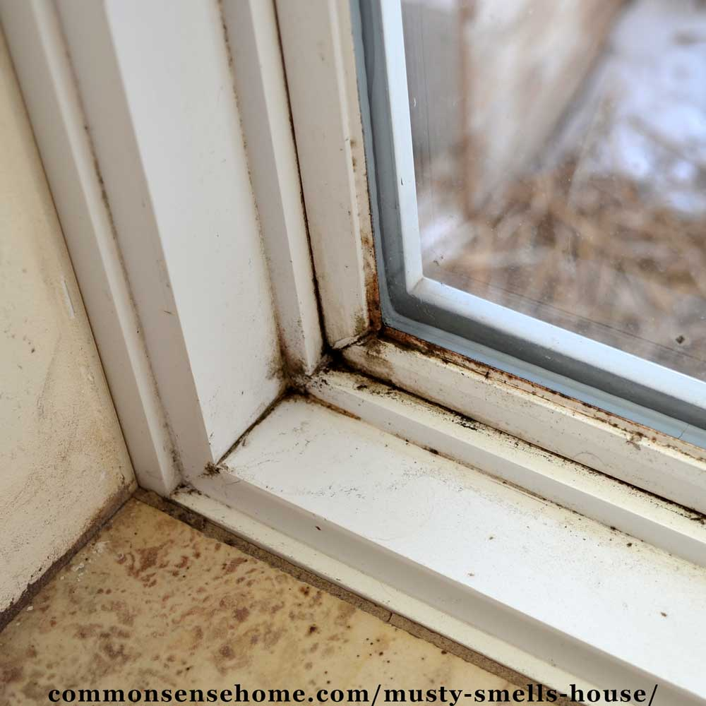 Musty window with mold