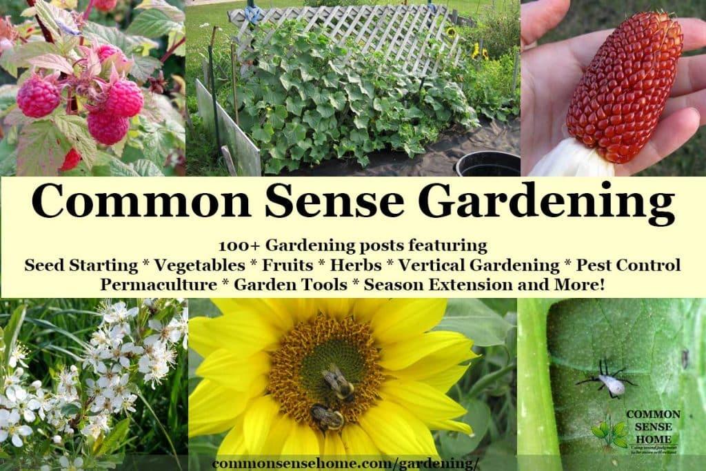 """Common Sense Gardening"" text overlay on garden images"