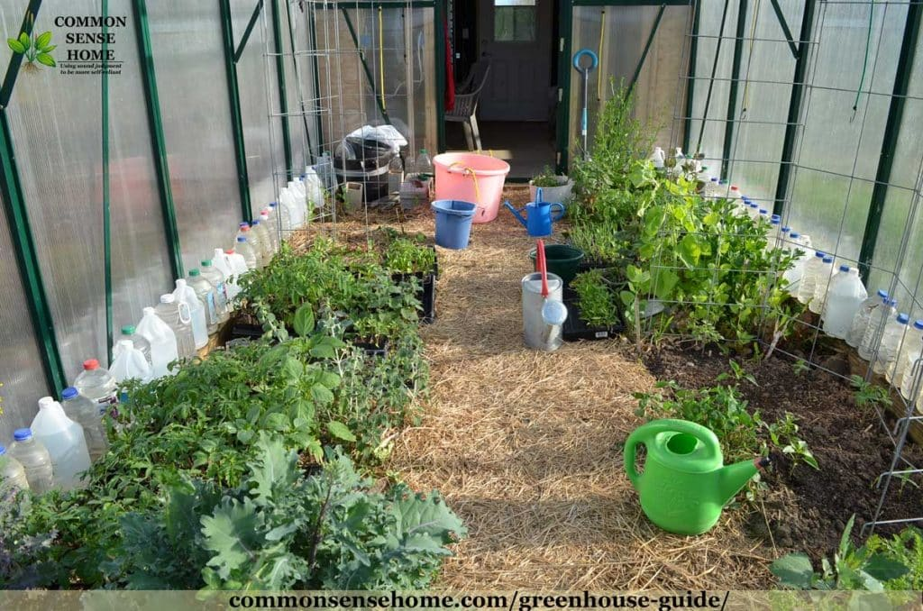 greenhouse interior with straw mulch, plants and water jugs for thermal mass