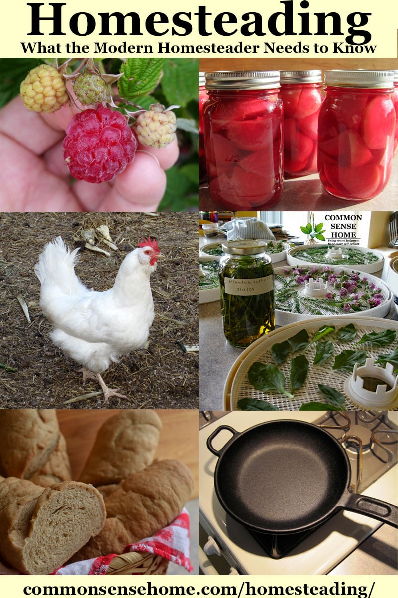 collage of homesteading photos