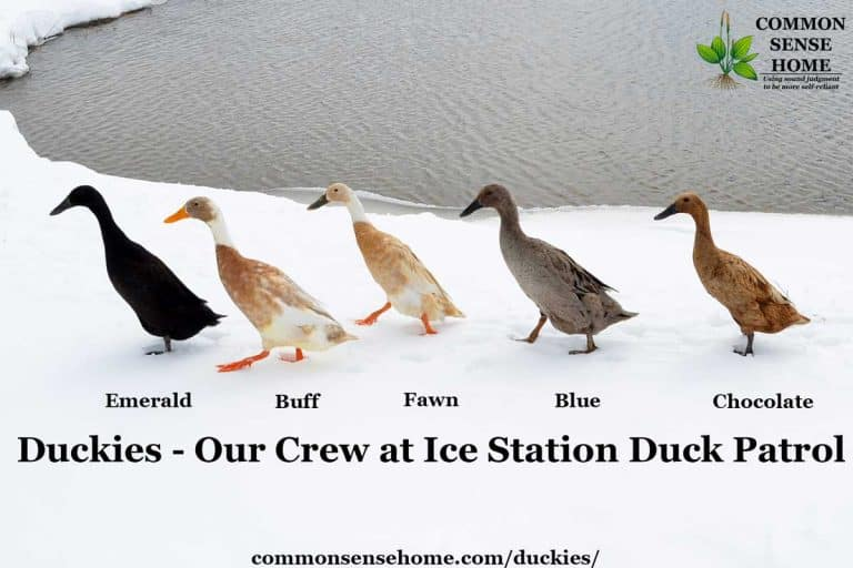 Duckies We Love – Our Crew at Ice Station Duck Patrol