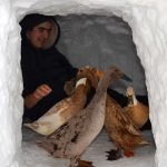 runner ducks in snow fort with boy