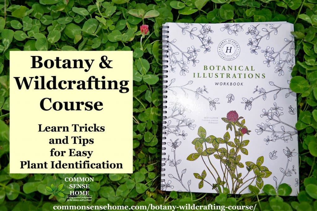 "Botanical Illustrations Notebook in clover with text overlay ""Botany and Wildcrafting Course"""