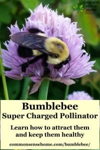 """bumblebee on chive blossom with text overlay """"Bumblebee - super charger pollinator"""""""