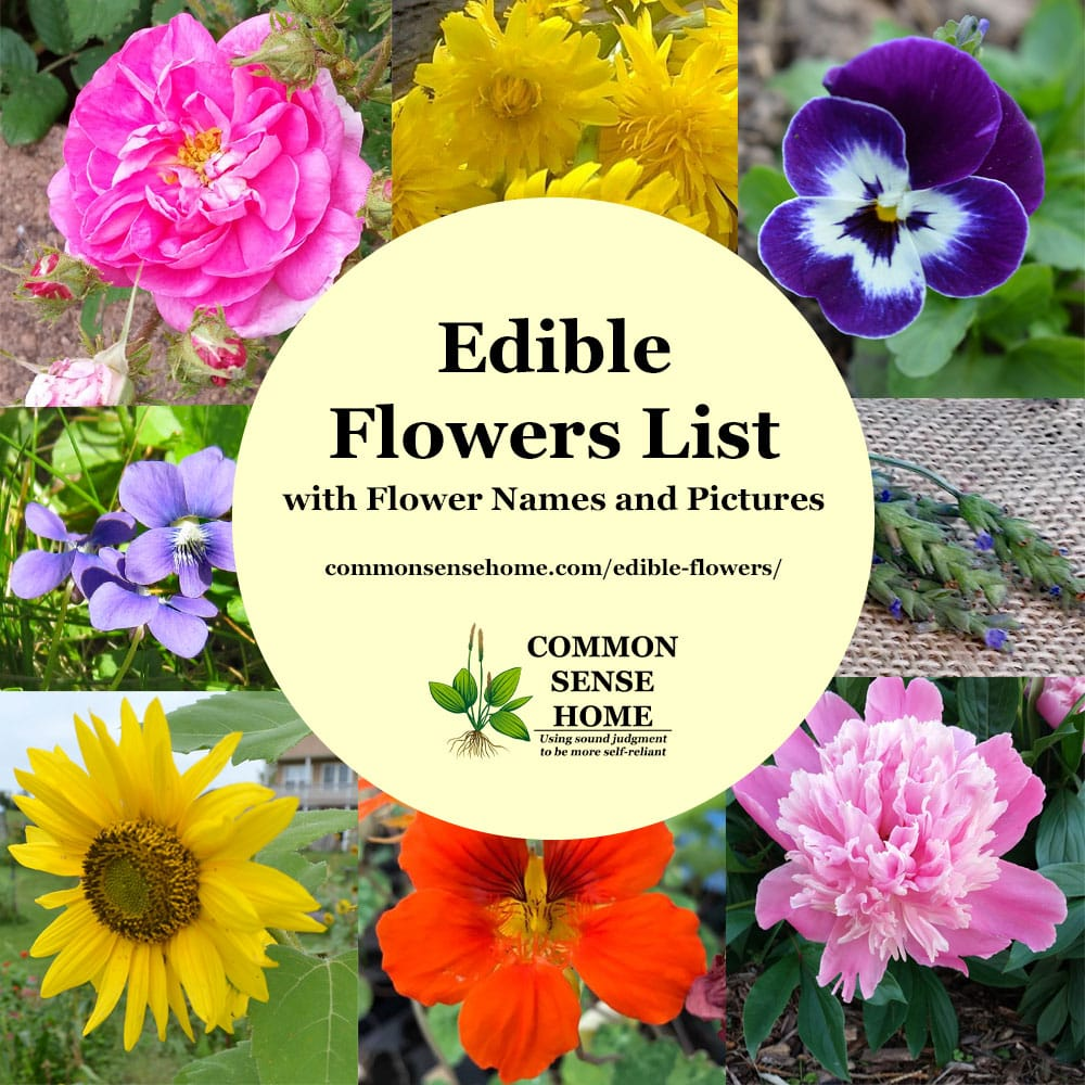 "Text ""Edible Flowers List with Flower Names and Pictures"" surrounded by photos of edible flowers"