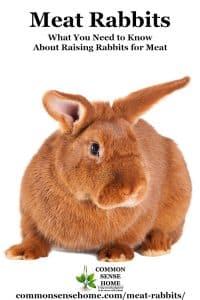 New Zealand Red Meat Rabbit on white background