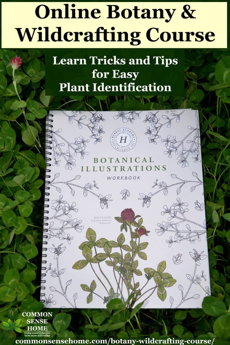 Online Botany & Wildcrafting Course at The Herbal Academy