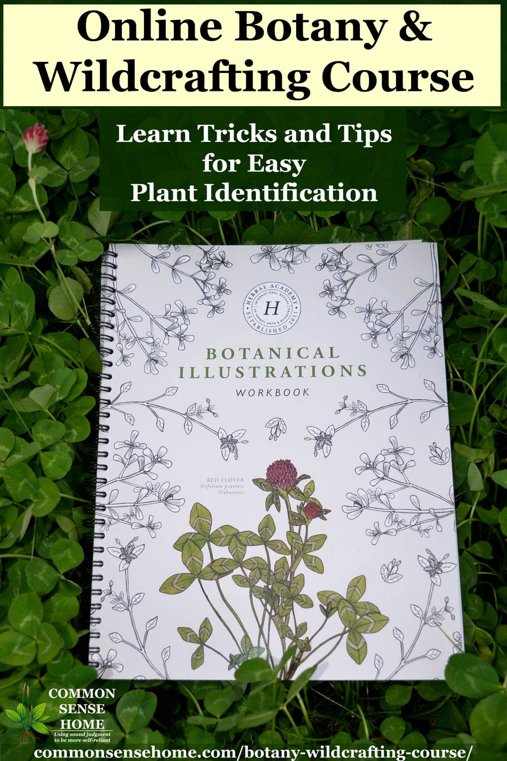 Botanical Illustrations Notebook in a patch of clover