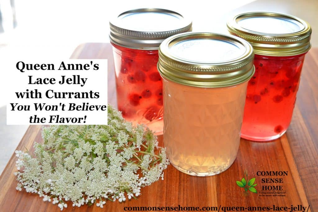 queen Anne's lace jelly with currants