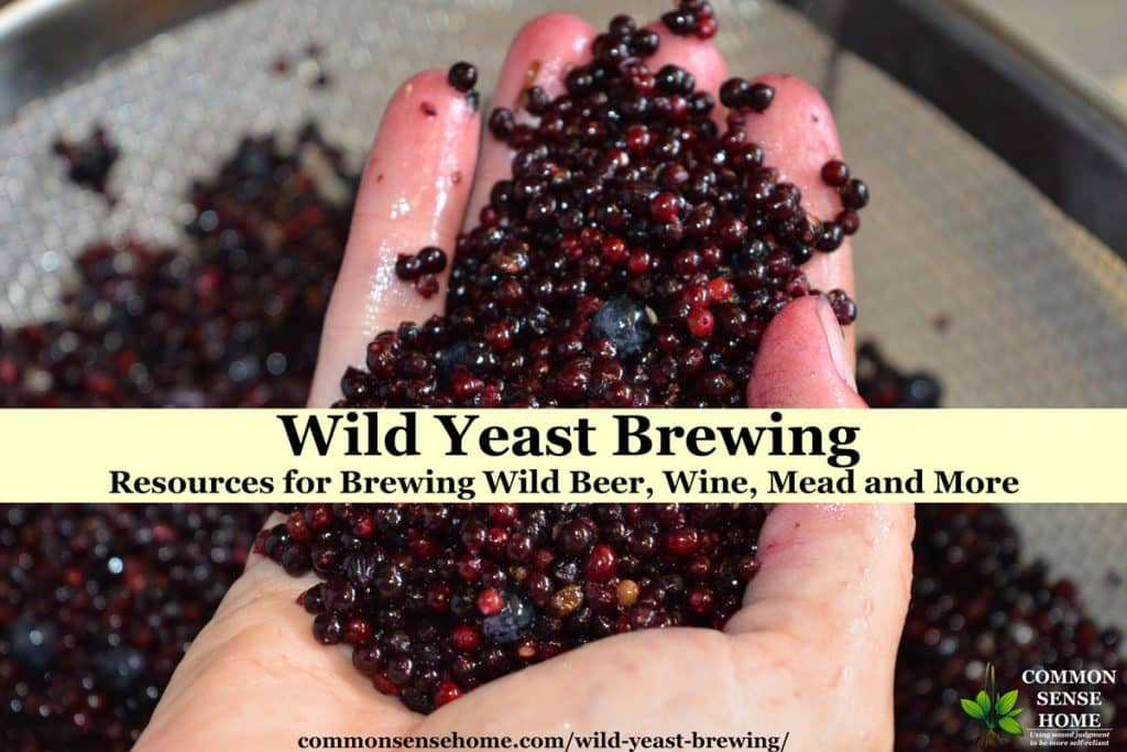 handful of elderberries for making wild yeast mead