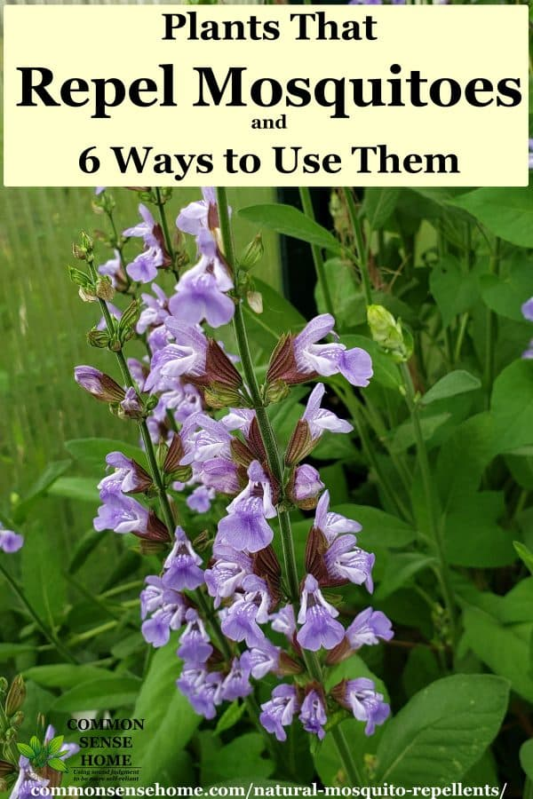 Natural Mosquito Repellents That Work Plants That Repel Mosquitoes