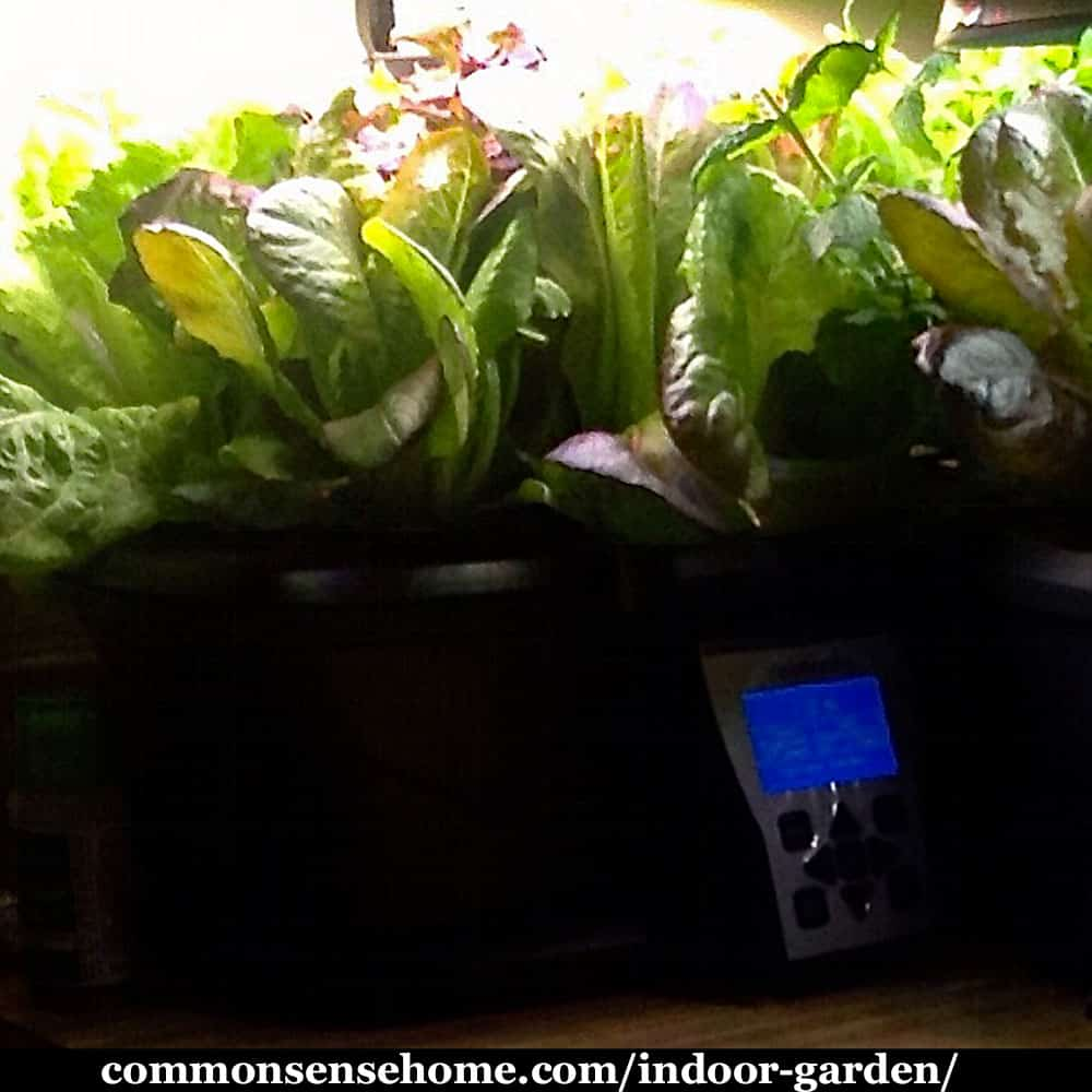 indoor garden with aerogarden and greens