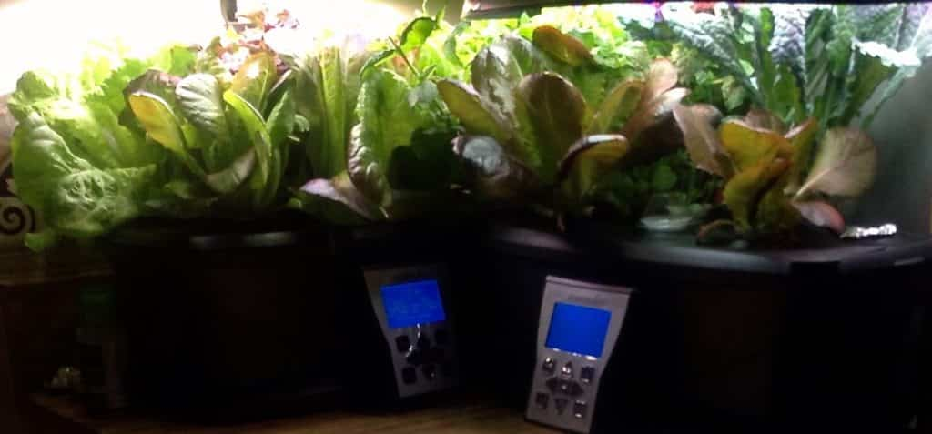 aerogarden filled with herbs and greens