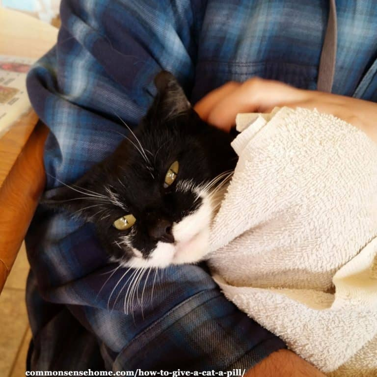 How to Give a Cat a Pill – 2 Easy Methods, Plus Tips to Calm Your Kitty