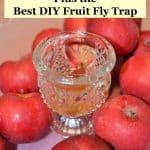 fruit fly trap in bowl of apples to get rid of fruit flies