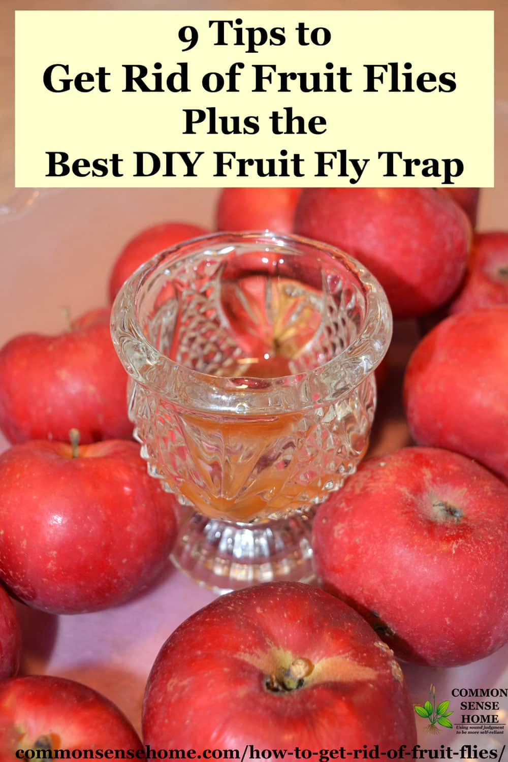 how to get rid of fruit flies plus the best homemade fruit fly trap. Black Bedroom Furniture Sets. Home Design Ideas