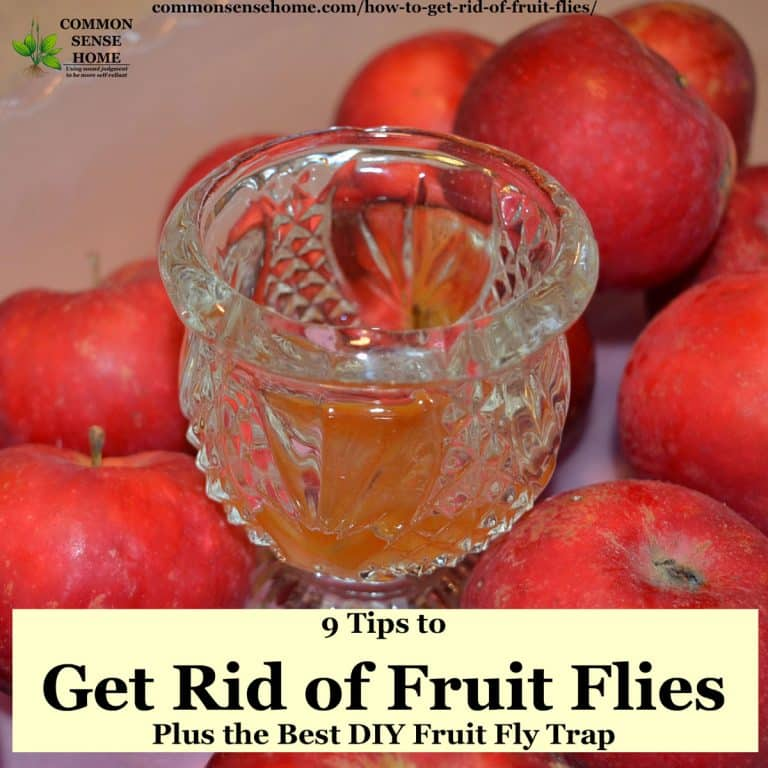 How to Get Rid of Fruit Flies, Plus the Best Homemade Fruit Fly Trap