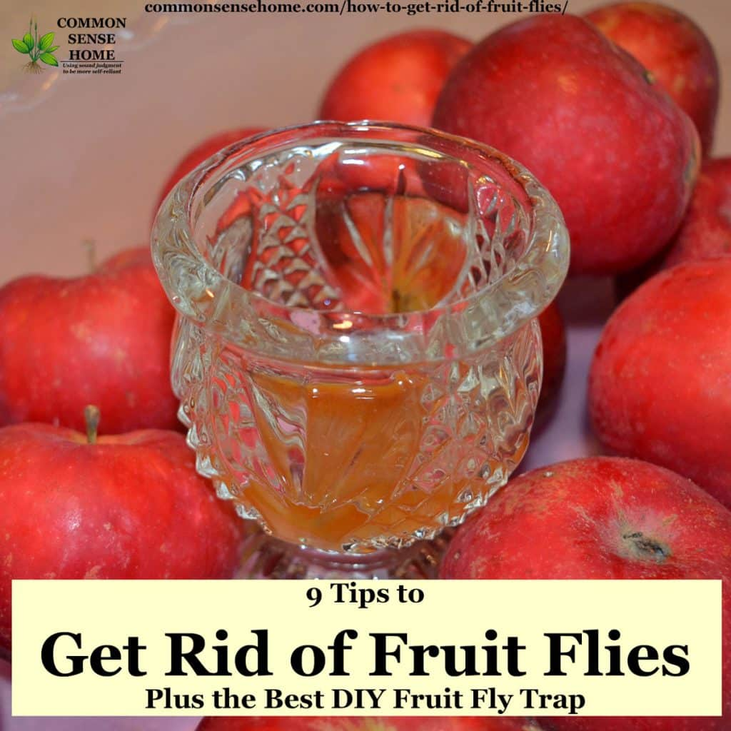 homemade fruit fly trap in bowl of apples