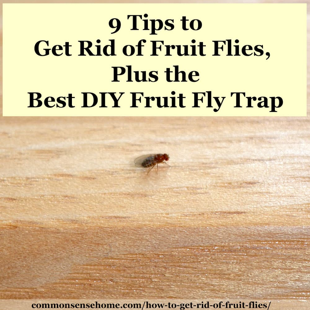 fruit fly on wood with text