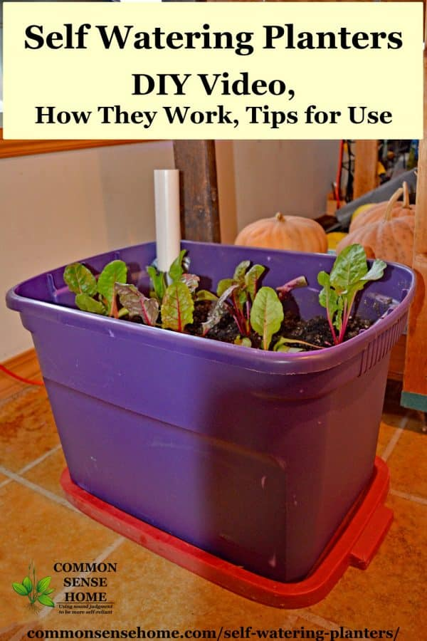 Self Watering Planters Diy Demo How They Work Tips For Use