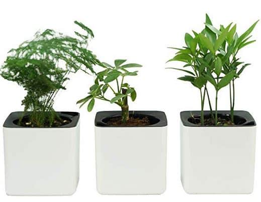self watering herb planters