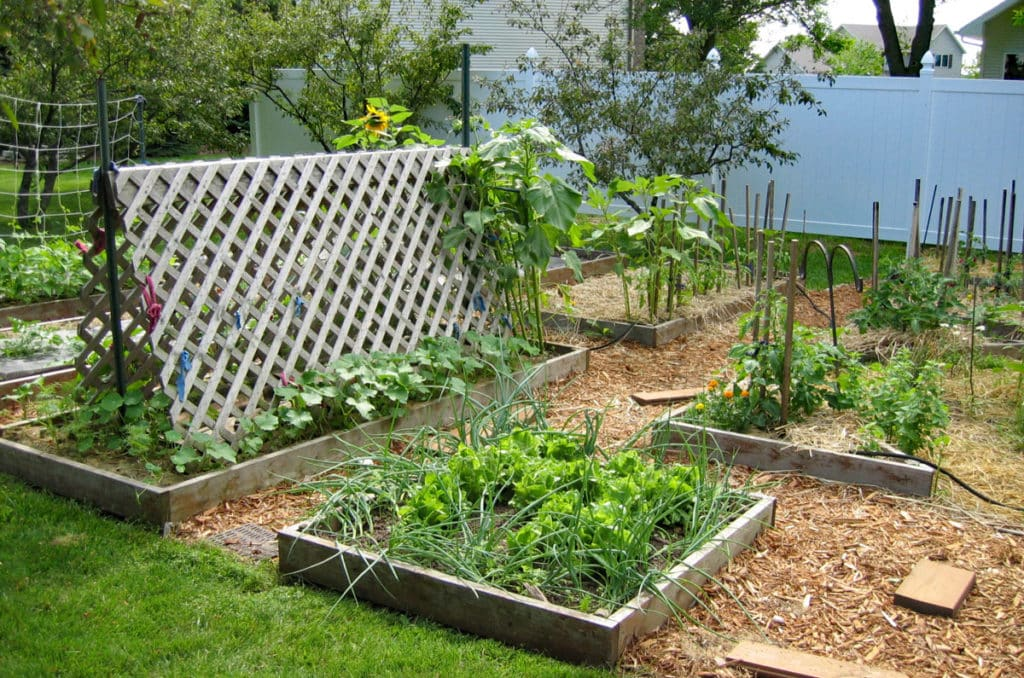 elevated cedar garden beds