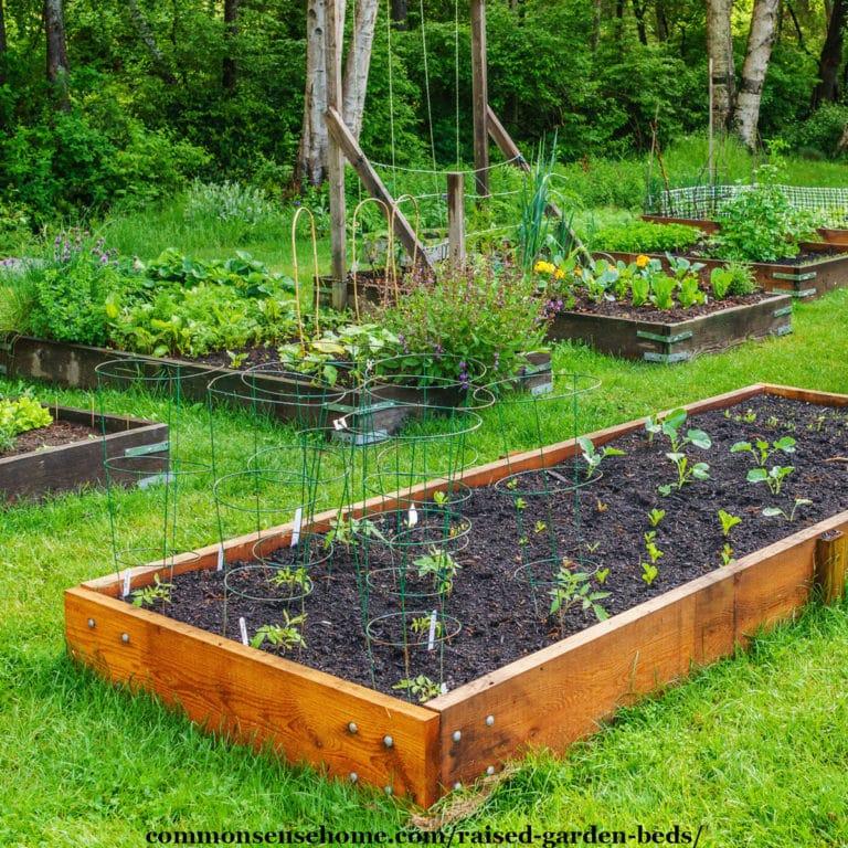 Raised Garden Beds – 5 Tips for Surefire Success