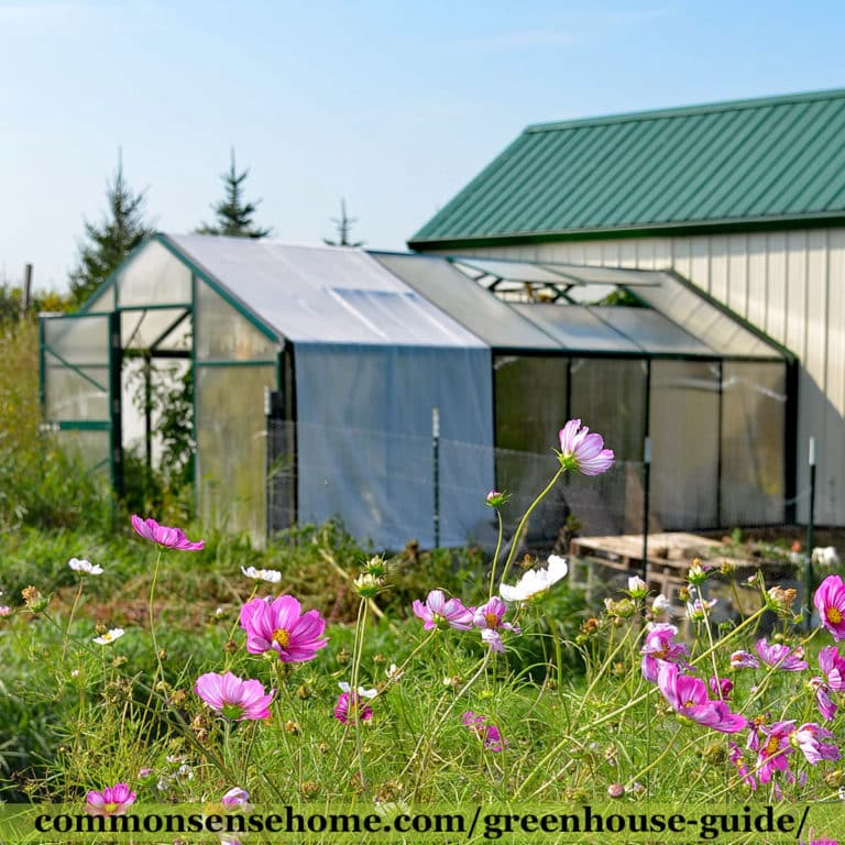 Greenhouse Guide – What You Need to Know Before You Build