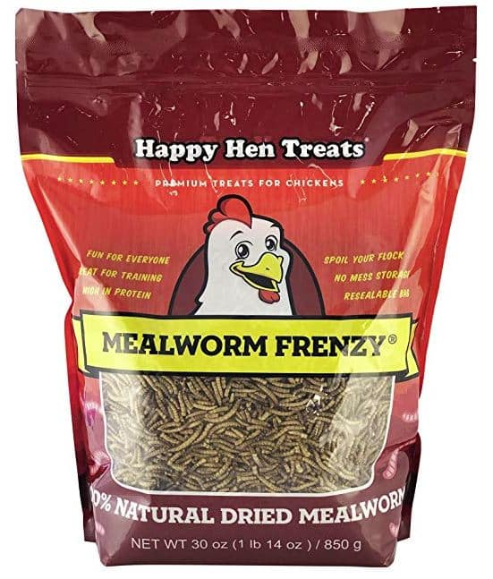 meal worms for chickens