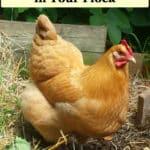 prevent bird flu in chickens