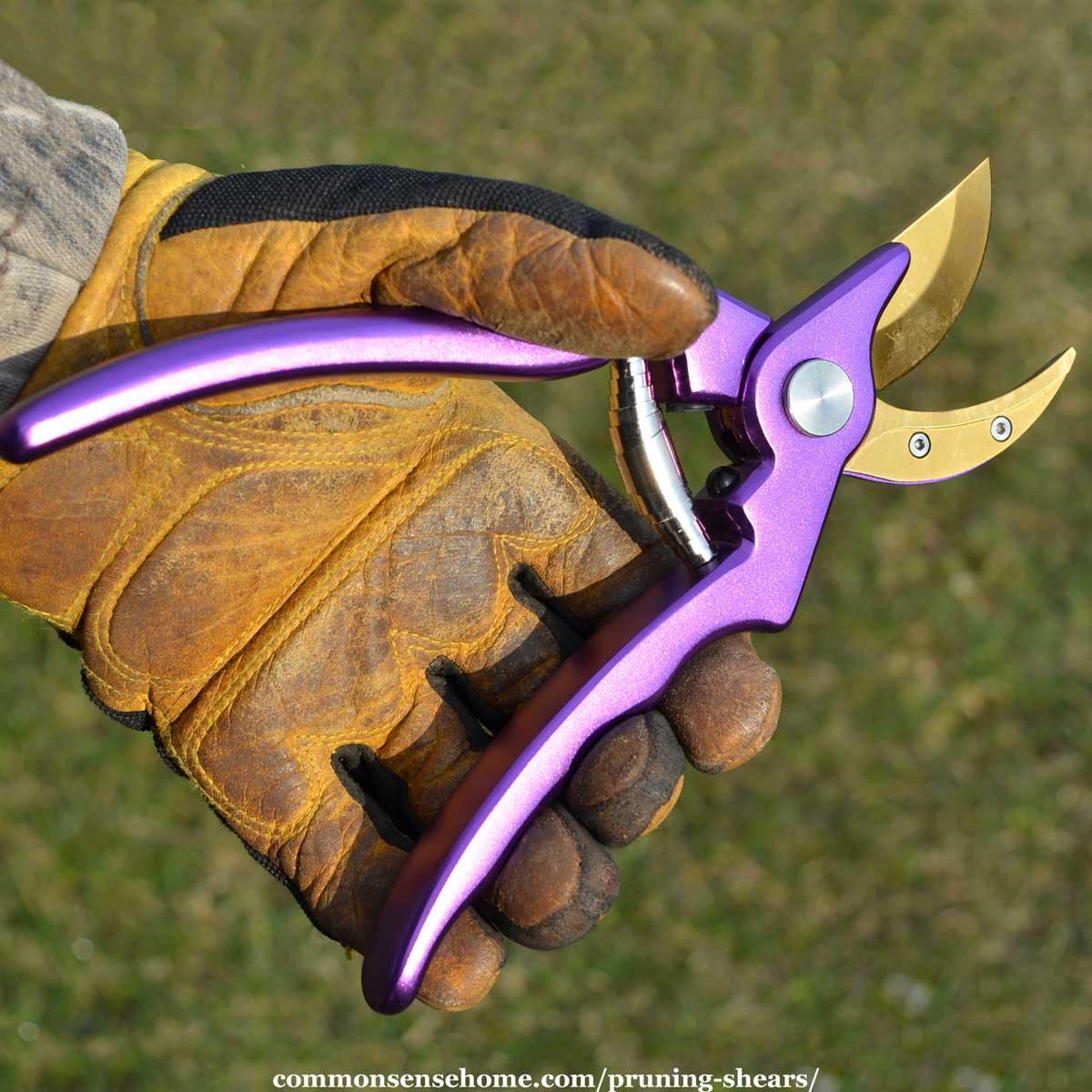 purple pruning shears