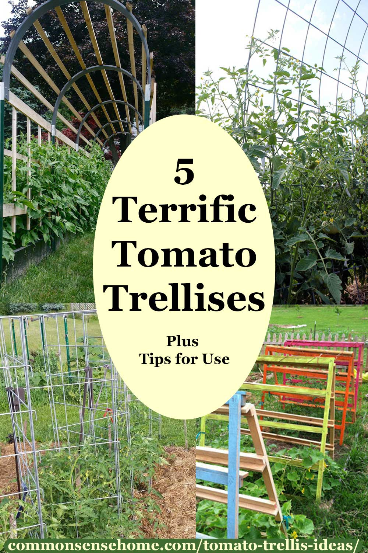 5 Terrific Tomato Trellises