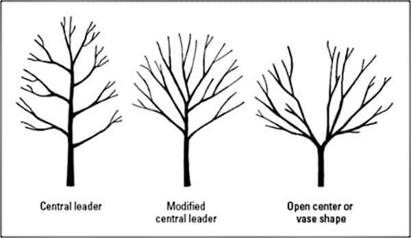 fruit tree pruning methods