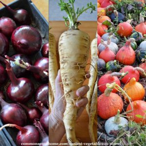 some of the easiest vegetables to store - onions, parsnips, winter squash