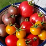 "Text ""Growing Tomatoes - 11 Tips for Success"" above bowl of tomatoes"
