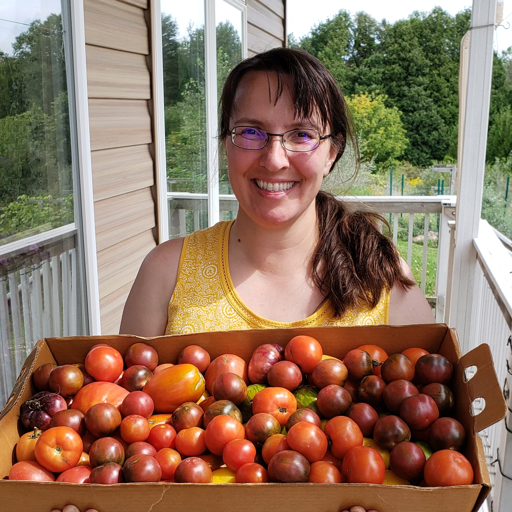 garden tomato harvest