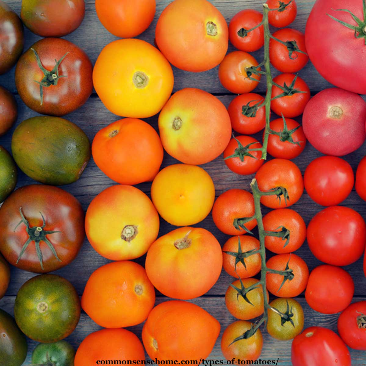 different types of tomatoes