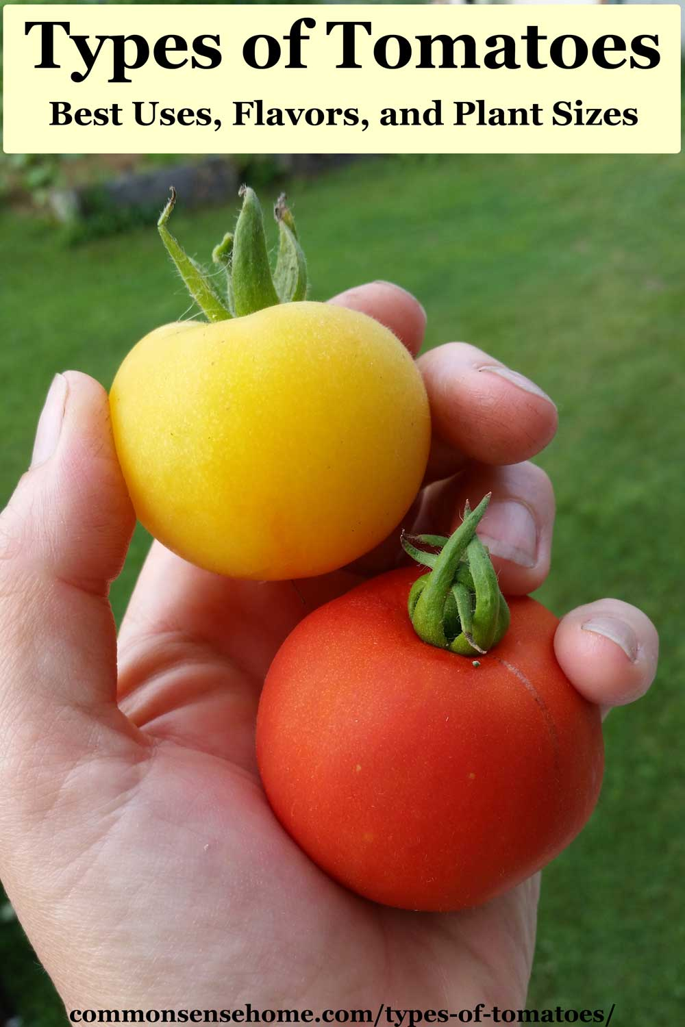 two types of tomatoes
