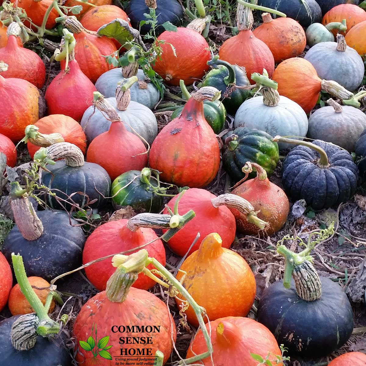 assortment of winter squash, one of the easiest vegetables to store