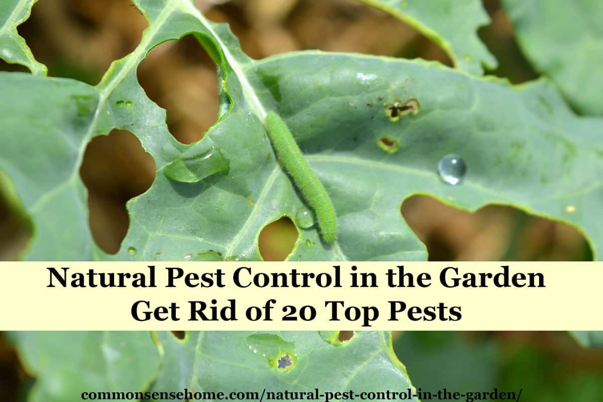 "Text ""Natural Pest Control in the Garden - Get Rid of 20 Tops Pests"" with cabbage worm on broccoli leaf"