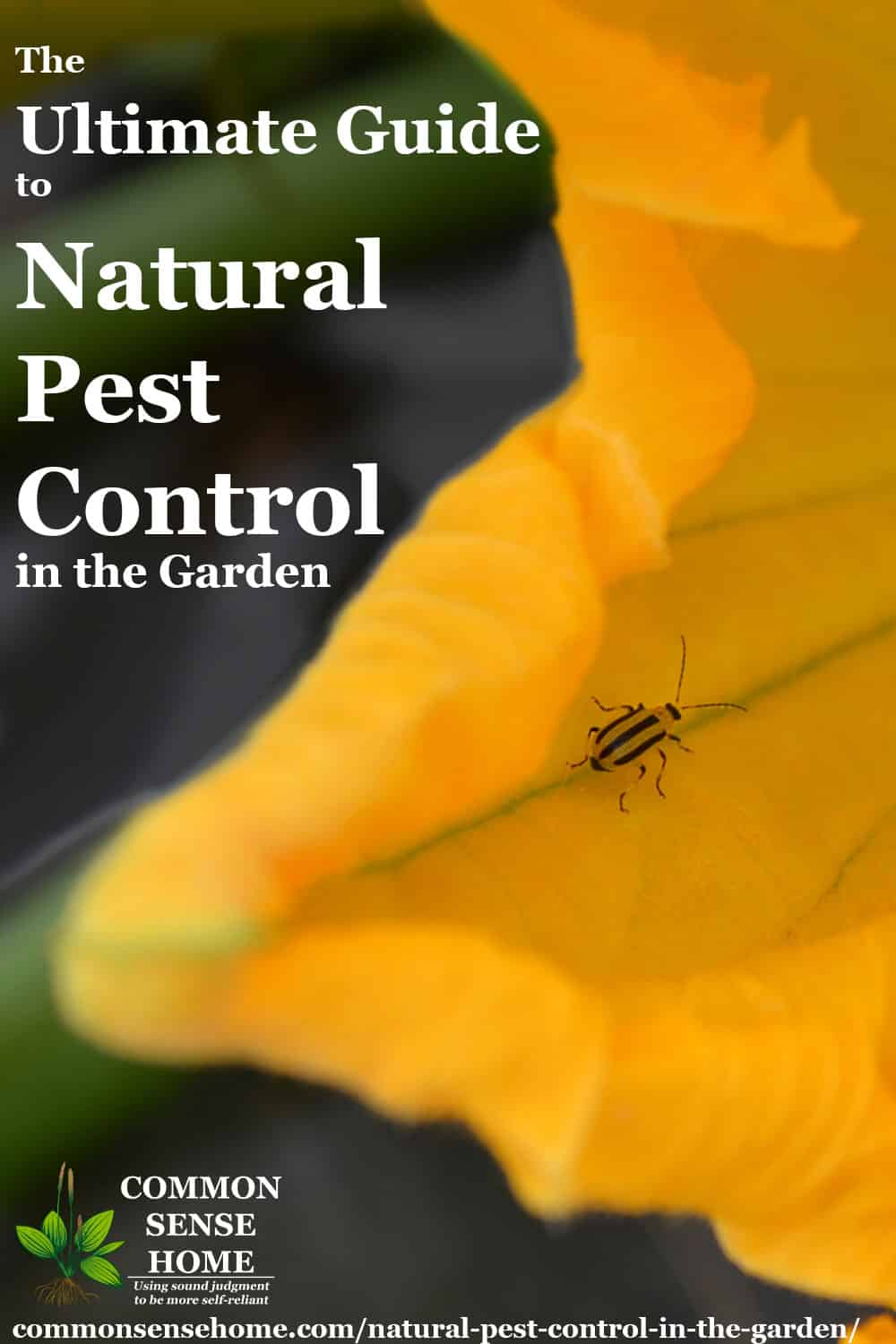 "Text ""The Ultimate Guide to Natural Pest Control in the Garden"" with cucumber beetle in squash flower"