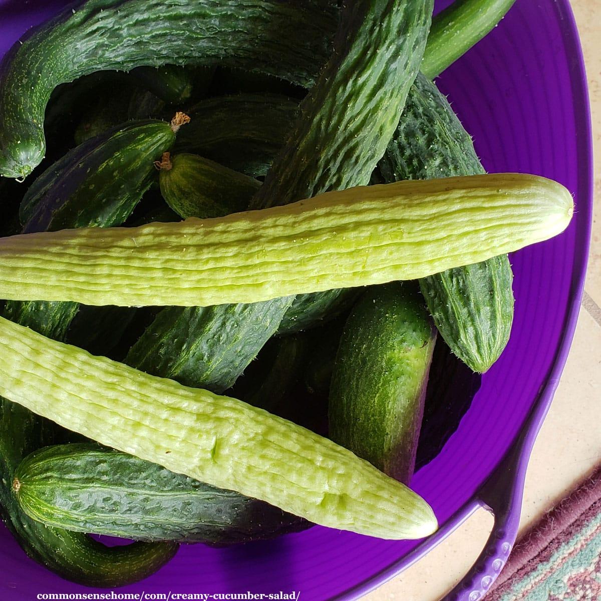 cucumbers in a bin
